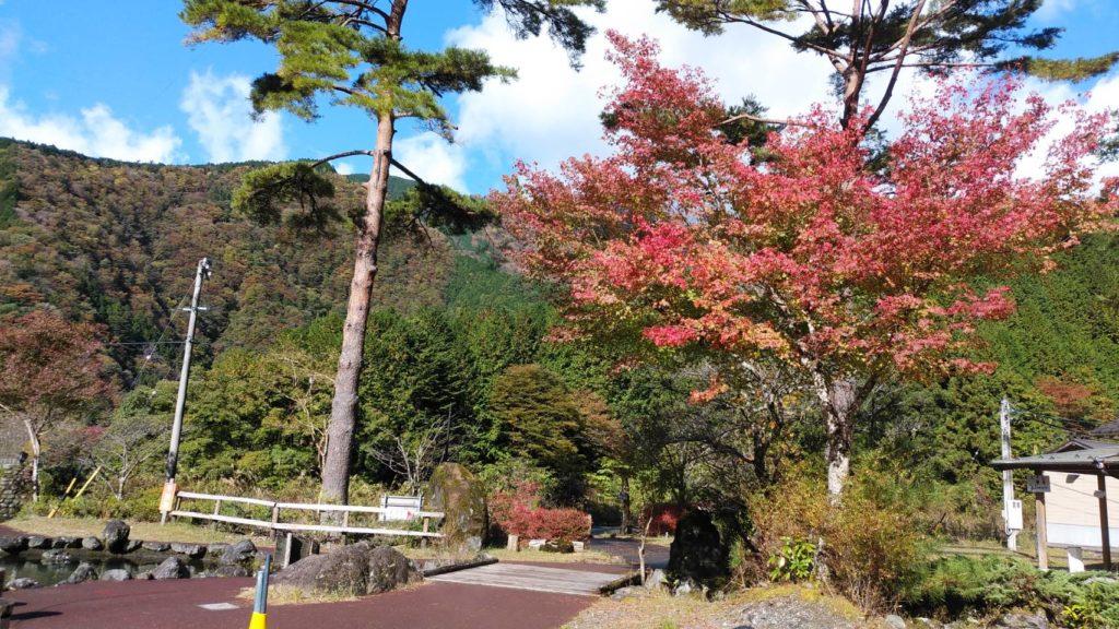 園内の紅葉1